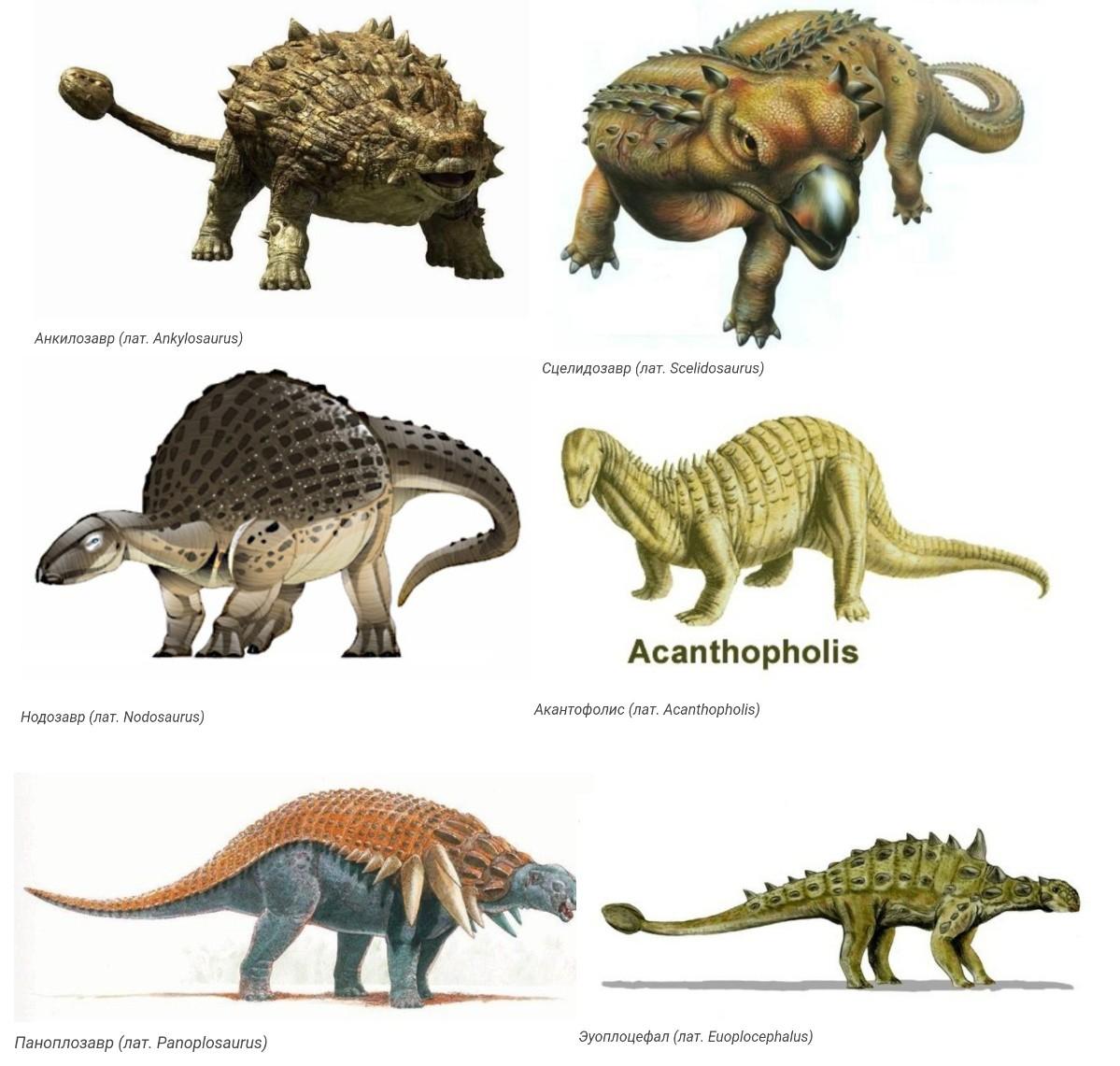 Динозавры с панцирем