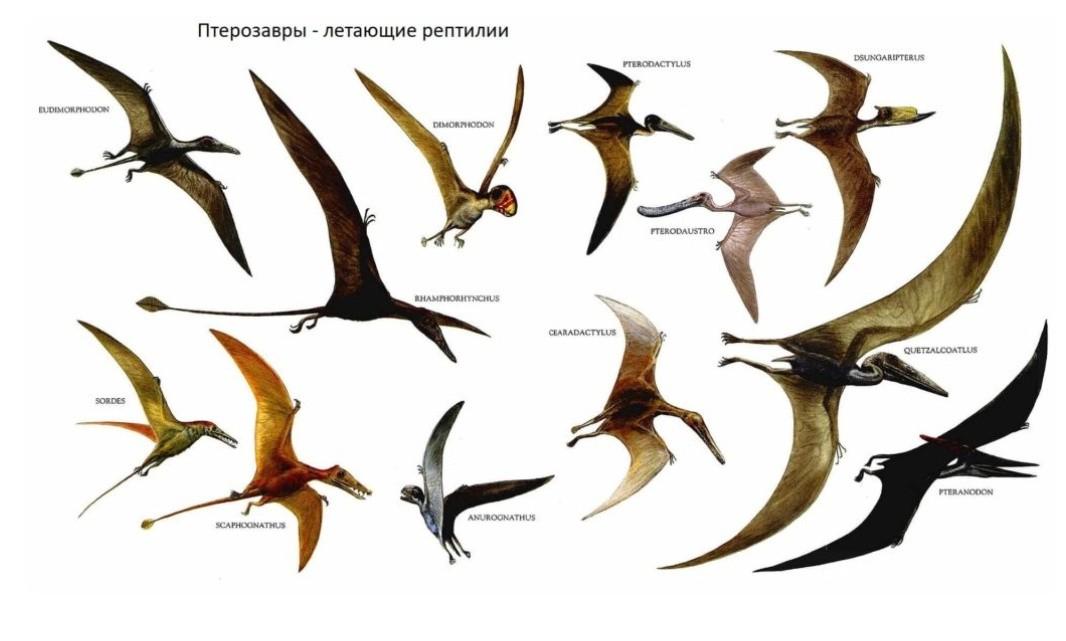 Динозавры с крыльями