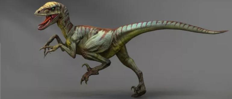 Велоцираптор (Velociraptor)