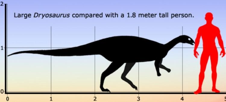 Дриозавр Dryosaurus