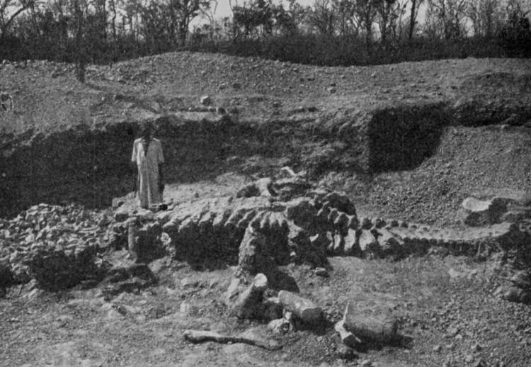 Dicraeosaurus фото