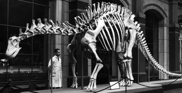 Дикреозавр фото скелета