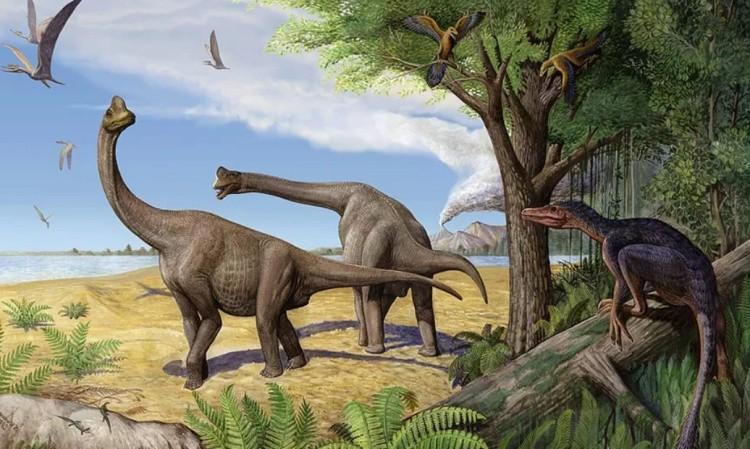 Europasaurus фото
