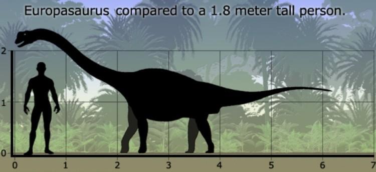 Европазавр(Europasaurus) размер