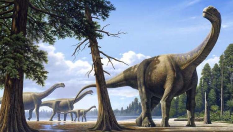 камаразавры фото