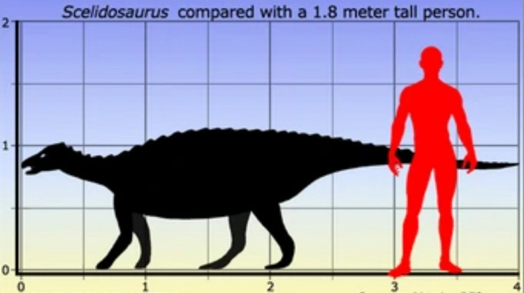 сцелидозавр размер