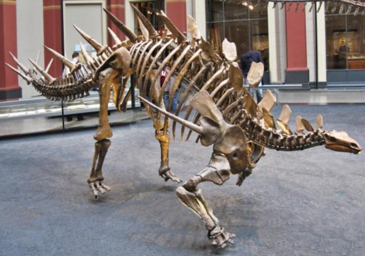 Кентрозавр скелет