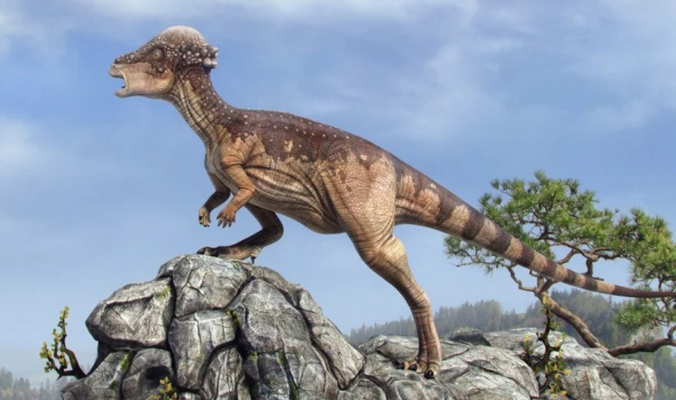 Пахицефалозавр динозавр