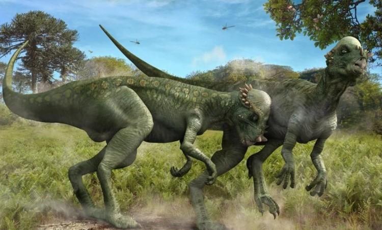 Пахицефалозавр фото