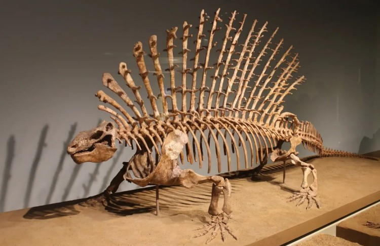 Эдафозавр скелет