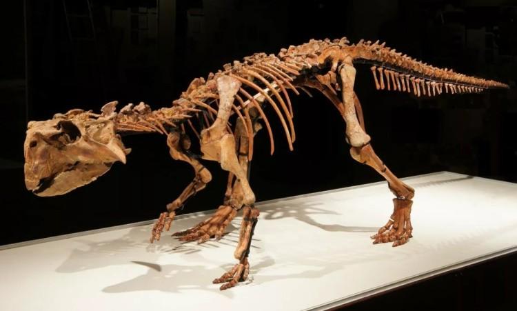 Пситтакозавр скелет