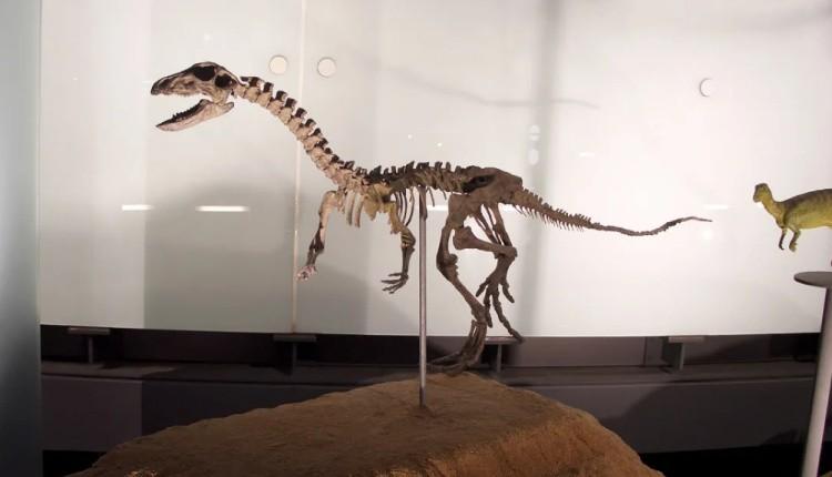 Гипсилофодон скелет