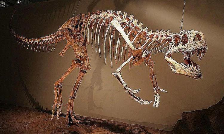 Афровенатор скелет