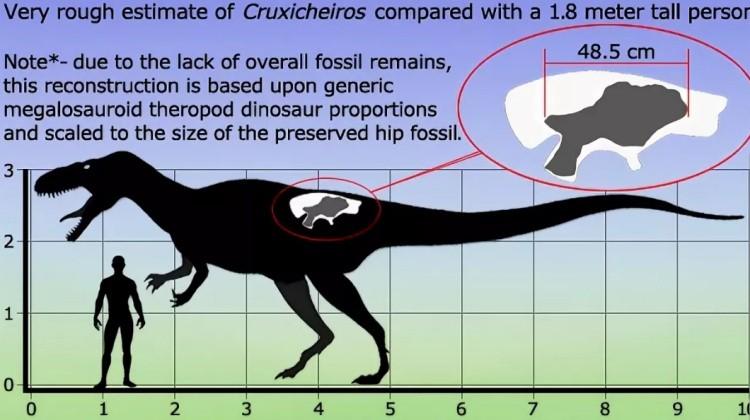 Круксихейрос размер