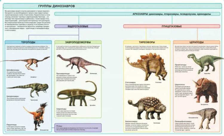 Ящеротазовые динозавры виды