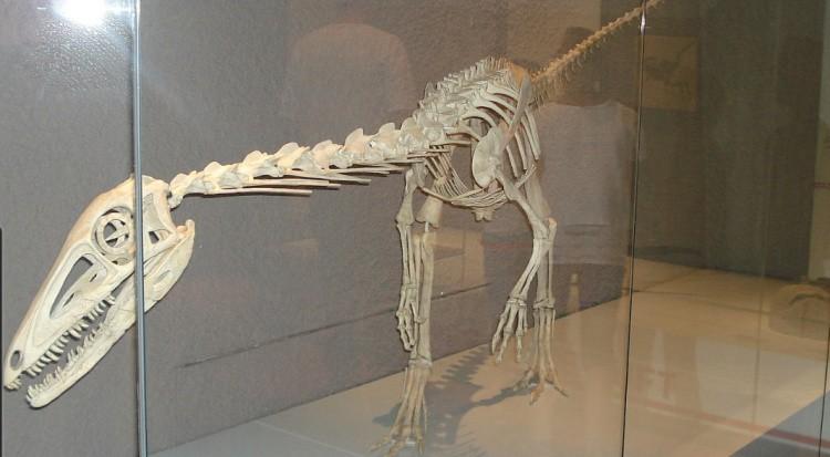 Лилиенстерн скелет