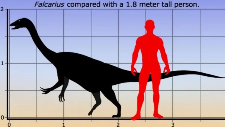 Фалкарий размер