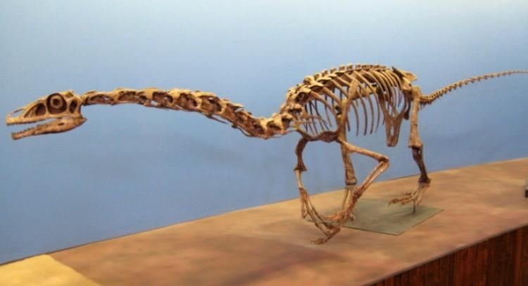 Фалкарий скелет