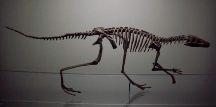 Логозух скелет