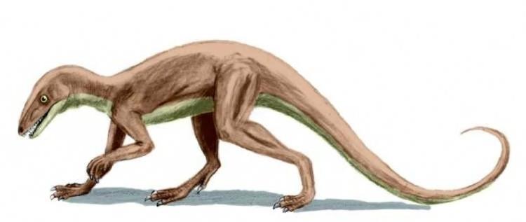 Логозух рептилия
