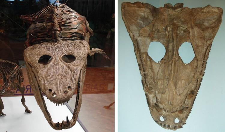 Мастодонзавр скелет