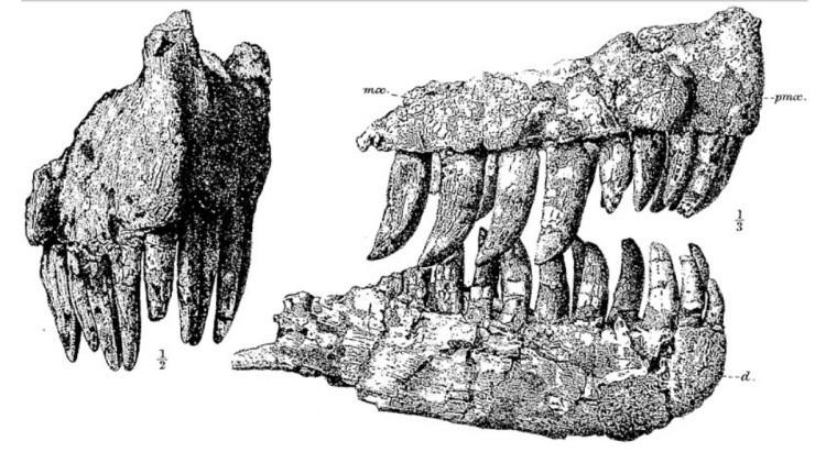 Гениодект зубы