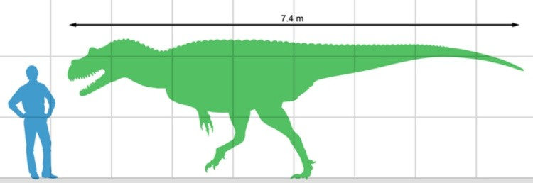 Гениодект размер