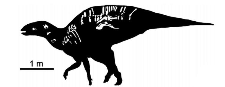 Уэуэканаутль скелет