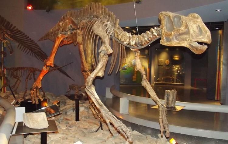 Латирин скелет